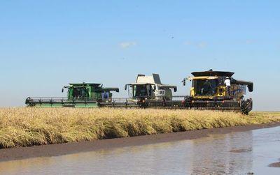 La exportación de arroz se incrementó un 25%