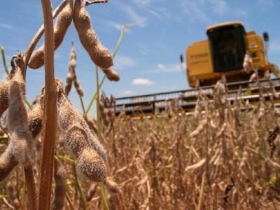 """Richer alerta del """"daño de soja"""" a comunidades campesinas paraguayas"""