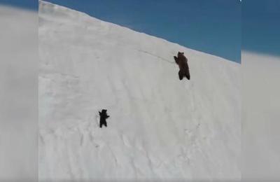 La triste verdad detrás del video del 'oso perseverante' que escala una montaña nevada