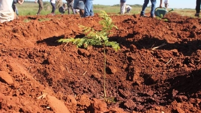HOY / Reforestación: cuando plantar un árbol se convierte en un legado para el futuro