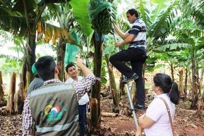 Determinación de residuos de plaguicidas en banana