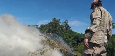 Destruyen más de 50 toneladas de marihuana – Prensa 5