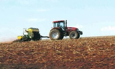 Lluvia que desafía plantación, mantiene la expectativa de la cosecha