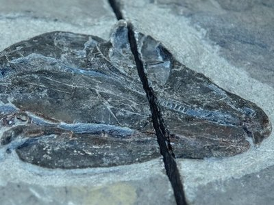 Hallazgo del reptil da nuevos indicios sobre evolución