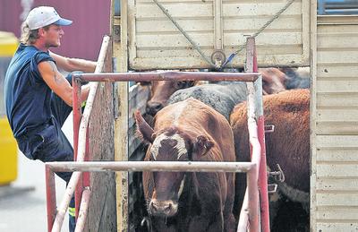 Exportación de ganado en pie en Brasil perdió fuerza en octubre