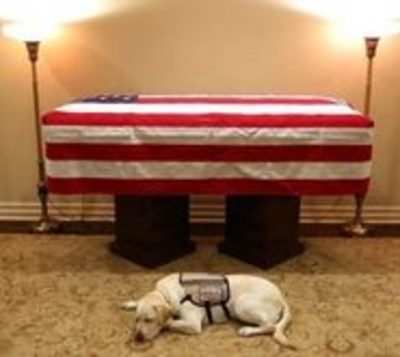 Sully, el guardián que custodió a George H. Bush hasta el último adiós