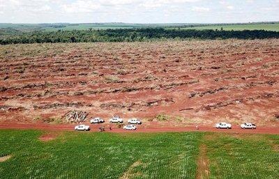 Licencia para destruir bosques de Canindeyú