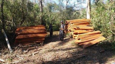 Sigue tala indiscriminada en Campos Morombí