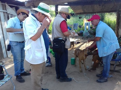 Detectan en el Chaco primeros casos de leishmaniasis canina