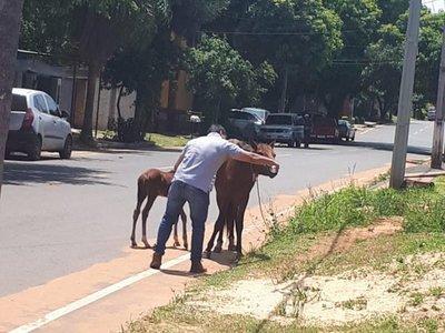 Se bajó del auto y dio de tomar agua a dos caballos