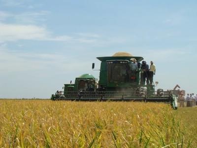 Arroceros uruguayos destacan el crecimiento del sector en Paraguay y potencial para ganar mercados en el mundo
