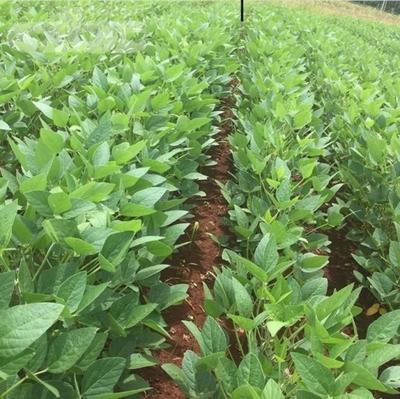 Bioinsumos para cultivos intensivos y extensivos