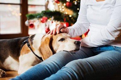 Recomendaciones para cuidar a las mascotas de la pirotecnia