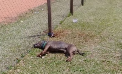 Perro fallece tras permanecer atado por horas bajo el sol