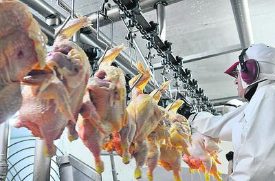 El paraguayo consumió entre 18 y 20 kilos de carne de pollo en 2018