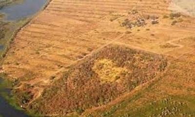 Infona insta a ciudadanos a denunciar casos de deforestación