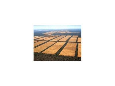 El 90% de la deforestación es consentida por el gobierno, según fiscal