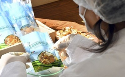 Itaipu cultivó más de 50 mil plantines medicinales