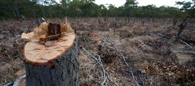 Titular de INFONA minimina deforestación en el Chaco