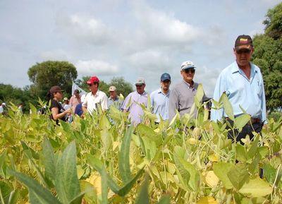 Buen material semillero es clave para impulsar el agro en el Chaco