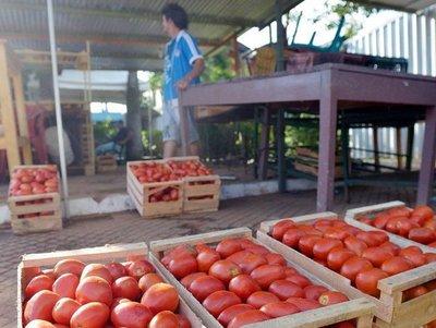 Productores de hortalizas dicen que el contrabando les asfixia