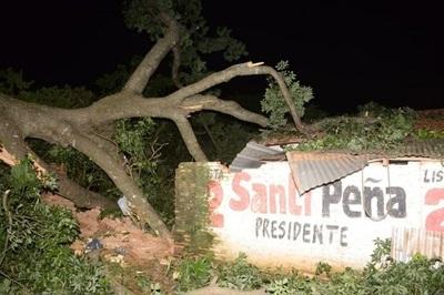 Añoso árbol aplasta vivienda
