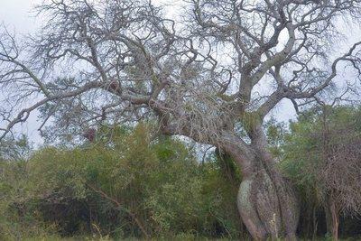 Bebé se salva de morir aplastada por un viejo árbol