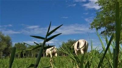 En Neuland incrementarán la producción ganadera y agrícola durante el año