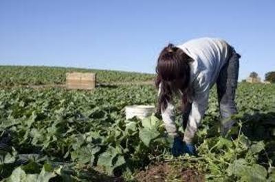 HOY / Buscan erradicar el trabajo infantil en zonas rurales