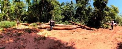 Deforestación: Informaciones alarmistas no tienen sustento