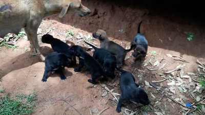 El final feliz de Rubia y sus siete cachorros, los refugiados de Ñu Guasu