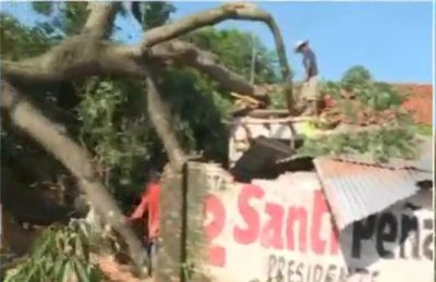 Cayó árbol por la casa y bebecito se salvó de milagro