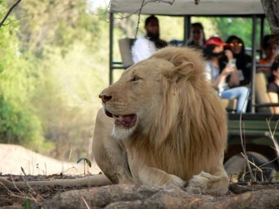 El turismo responsable exige respetar a los animales