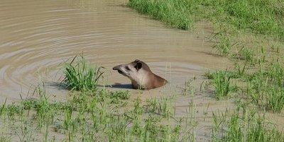 Un refugio para animales en el Chaco