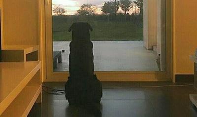 Publican imagen de mascota de jugador desaparecido esperando a su dueño