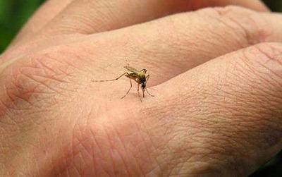 Vigilancia de la Salud reportó 38 nuevos casos de dengue