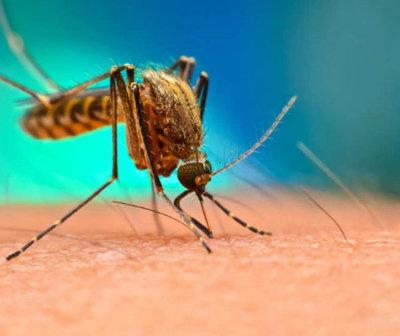 Paraguay registra 60 casos de dengue