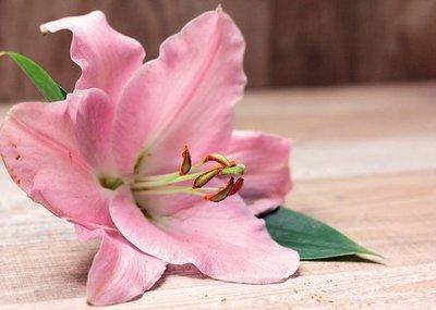 Flores que enamoran