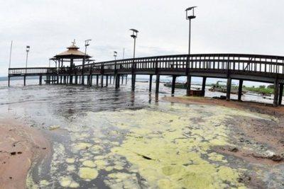 Cianobacterias aparecen con mayor volumen en el lago Ypacaraí