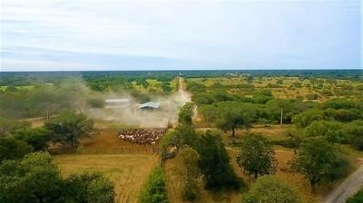 Denuncian desaparición de unos 120 cabezas de ganado en una estancia del Chaco