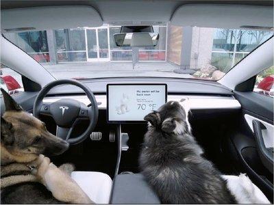 Tesla presenta su dog mode para dejar al perro en el auto