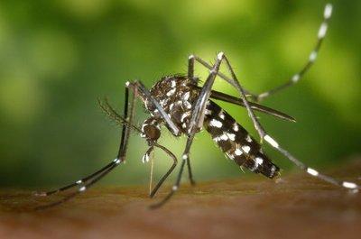 Dengue: Salud confirma 94 casos y 7 de chikungunya