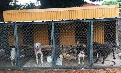 HOY / A puro pulmón, joven rescata a perros de las calles y apela a la solidaridad para costear gastos