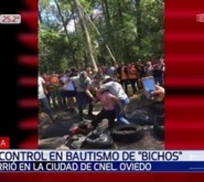 """Descontrol en bautismo de """"bichos"""" en Coronel Oviedo"""