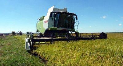 Arroceros uruguayos que plantaron en Paraguay lograron un resultado positivo y prevén aumentar el área