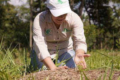 A Todo Pulmón busca plantar 250.000 árboles con el Proyecto Independencia Verde