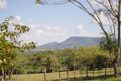 A Todo Pulmón quiere plantar 250.000 arbolitos en el departamento de Guairá