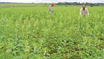 Asisten a productores de 6 departamentos con programa de modernización agrícola