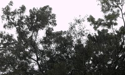 Sábado lluvioso y con tormentas eléctricas – Prensa 5