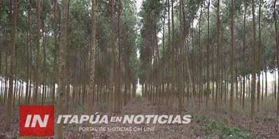 AGROFEST: INTERESANTES CAPACITACIONES SOBRE PRODUCCIÓN DE EUCALIPTOS.